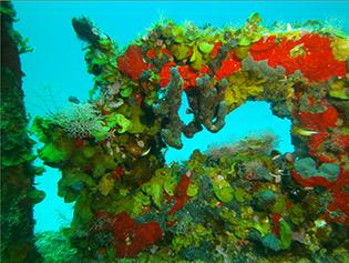 Riff an der Riviera Maya © tst